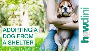 Adopting A Dog From A Shelter Puppy Rescue Myths And Facts