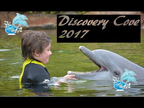 Discovery Cove 2017 dolphin swim, aviary lots of fun