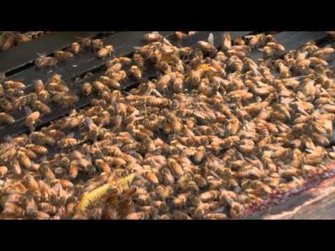 Nectar Creek Honeywine