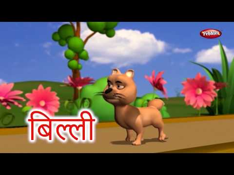 Animal Facts in Hindi | Cat Facts in Hindi | Cat Essay in Hindi | Cat Song | Cat Story Hindi
