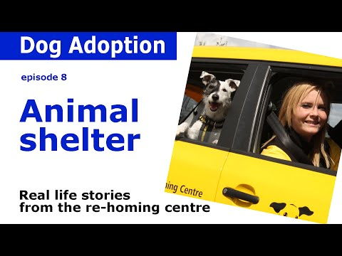 Animal shelter stories from Dogs Trust | Episode 8