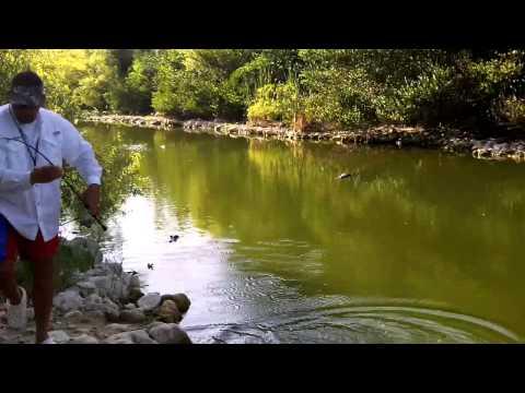 Fisherman Fights WILD Alligator For Fish In Florida SWAMP!!