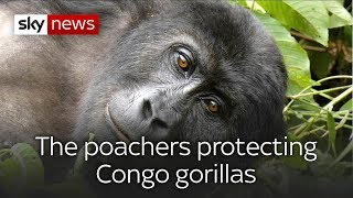 Poachers-turned-policemen protecting Congo gorillas