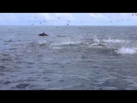 PANAMA FISHING - PANAMA FISHING CHARTER - PARADISE FISHING LODGE