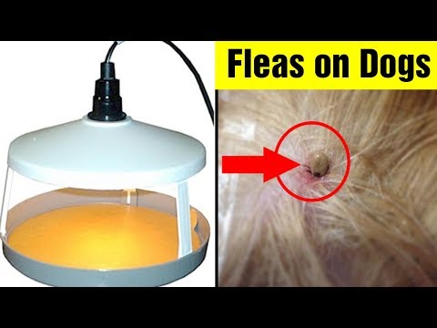 7 Natural Flea Remedies For Dogs|How To Get Rid of Fleas on Dogs