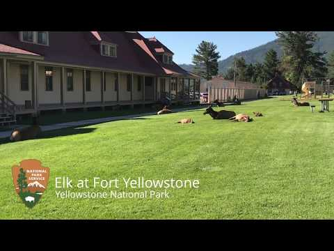 Elk at Fort Yellowstone