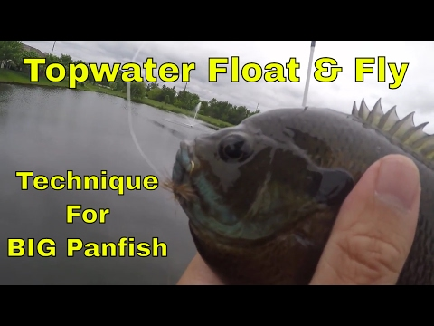 Topwater Float and Fly: Fishing Technique for Big Panfish