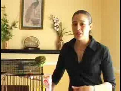 Caring for Parakeets : Pairing Parakeets