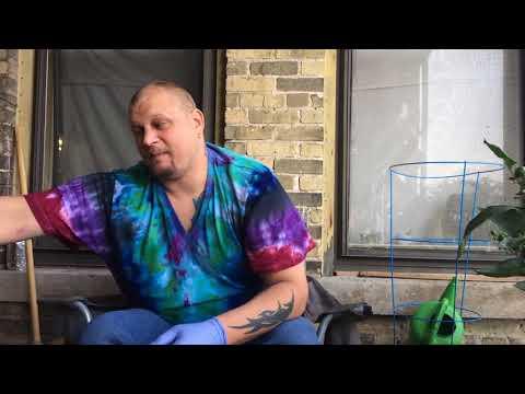 Carolina reaper x pink tiger chili pepper pod review
