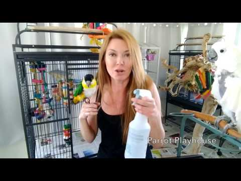 🐦Cage Cleaning at Parrot Playhouse❤️