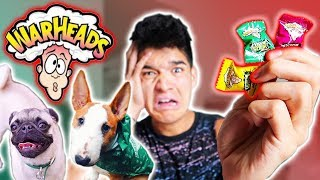 PUPPIES vs. SOUR CANDY!