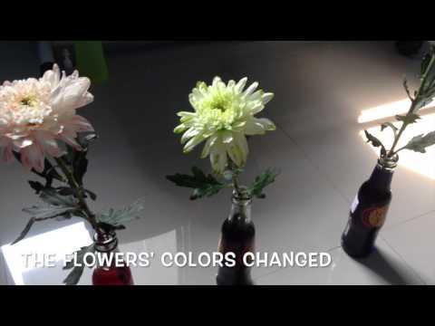 KBSTEM2015 - KEEP CUT FLOWERS FRESH