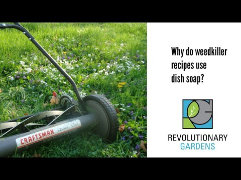 Why do weedkiller recipes use dish soap?