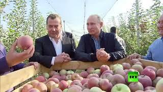 """بوتين يحضر هدية """"لذيذة"""" للسيسي ويطلب من السعودية والإمارات تذوقها"""