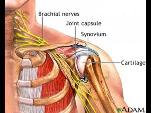 Simple Exercise to Reduce Nerve Pressure in Neck & Bursitis in Shoulder / Dr Mandell