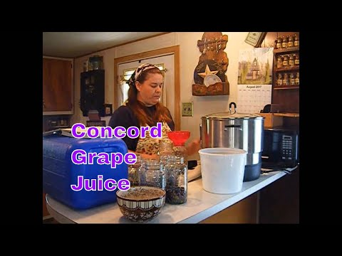 Amish Canning Recipe  harvesting Grapes !