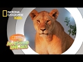 Download Super Pride   Awesome Animals In Mp4 3Gp Full HD Video