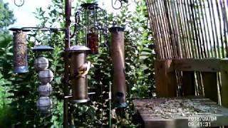 Allotment Bird Feeder Action