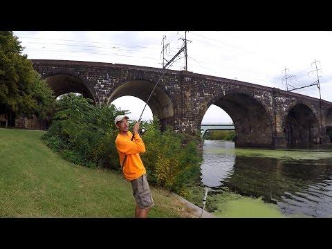 Flathead Hunting With Sea-Money Fishing (Philadelphia, PA)