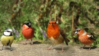 The Birds of Summer : Beautiful Video and Bird Sounds - Filmed in Slow Motion