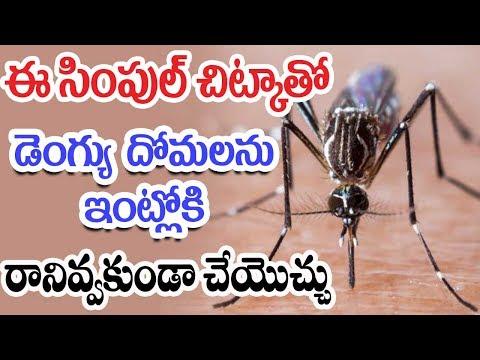 Simple Tricks To Avoid Mosquitos From dengue diseases - Mana Arogyam Telugu Health Tips