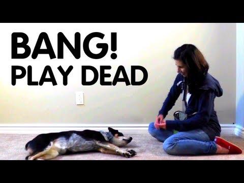 Teach dog to Play Dead!