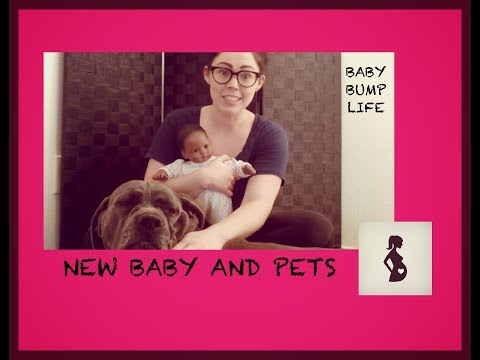 New Baby and Pets