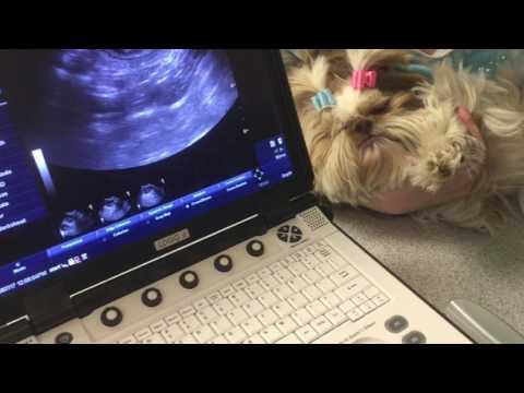 Maddie Pregnancy Ultrasound