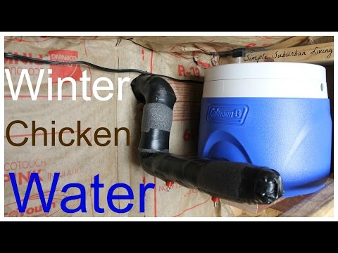 Winter Chicken Watering System - No cleaning, easy to fill, cheap, and efficient