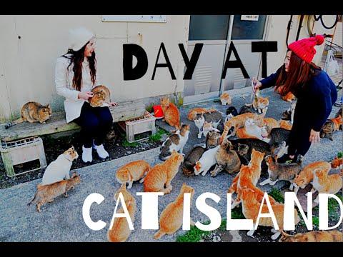 CAT ISLAND, JAPAN / Aoshima Island