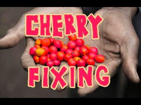 Cherry Fixing