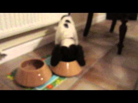 Thatcher's Spaniel Bowls in Action.