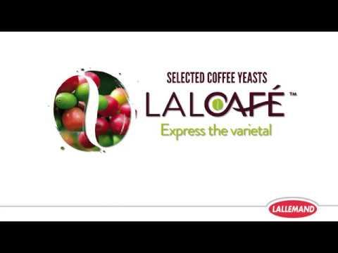 Procedimiento de levadura de café LalCafe