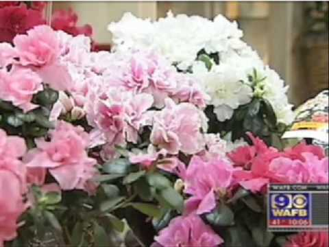Louisiana, Only State to Require Florist License - CBS Covers IJ's Challenge to That Law