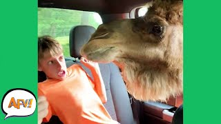 "When Animals ""ATTACK!"" 😂  