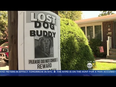 Mayor Allows Missing Dog Flyers