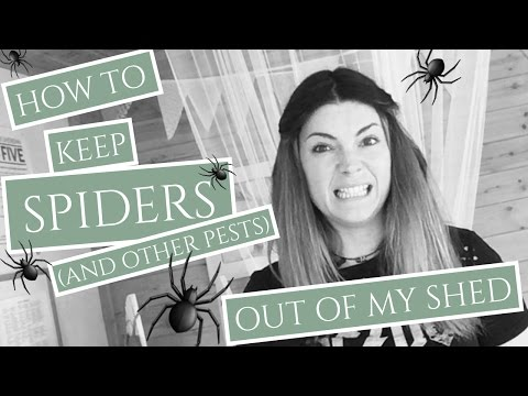 What is the Best Way to Keep Spiders & Pests Out?