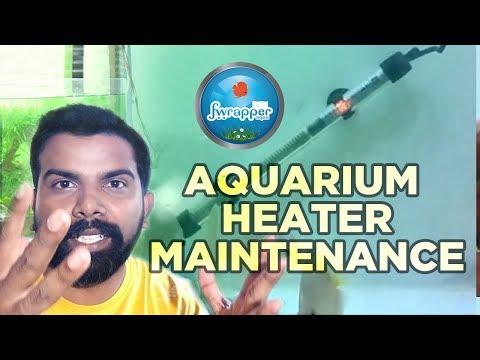 Aquarium Heater Setup || Aquarium Heater maintenance || Discus Fish || Fish Tank