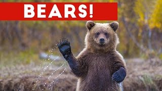 Funniest Cute Bear Video Compilation 2016 | Funny Pet Videos