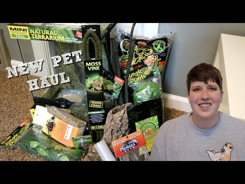 GETTING A NEW PET! CRESTED GECKO HAUL