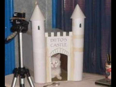 Make a Castle for Your Cat
