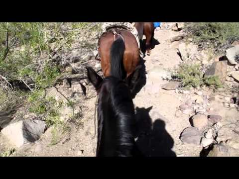 Riding Horses in Big Bend State Park