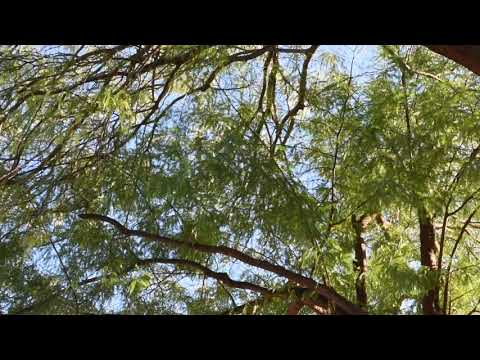 YOU DON'T HAVE TO WATCH THIS VIDEO... Unless You Like Birds Singing Videos - For My Sister