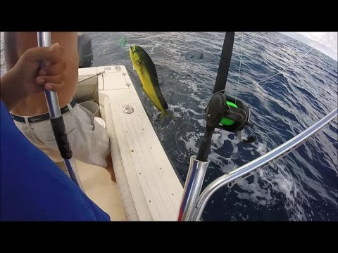 Offshore Dolphin and King Mackerel Fishing