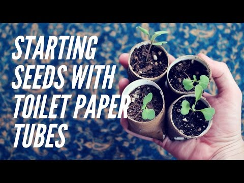 Toilet paper tube pots | Homemade DIY Biodegradable seed starting pots