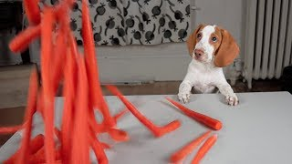 Puppy Gets Carrot Surprise! Cute Puppy Dogs Potpie, Maymo & Penny