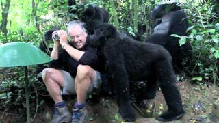 Touched by a Wild Mountain Gorilla (short)