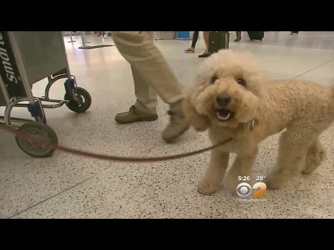New Rules For Flying With Pets