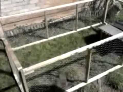 Save Cash - Make your own rabbit run