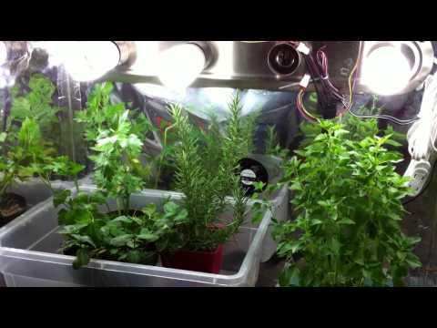 Indoor Garden Tips - Growing Herbs Indoors in Containers with Grow Lights